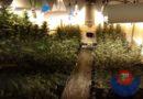 Localizan un cultivo de marihuana en un pabellón e investigan a dos personas en Astigarraga