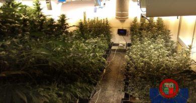 Localizan un cultivo de marihuana en un pabellón e investigan a dos personas en Astigarraga,