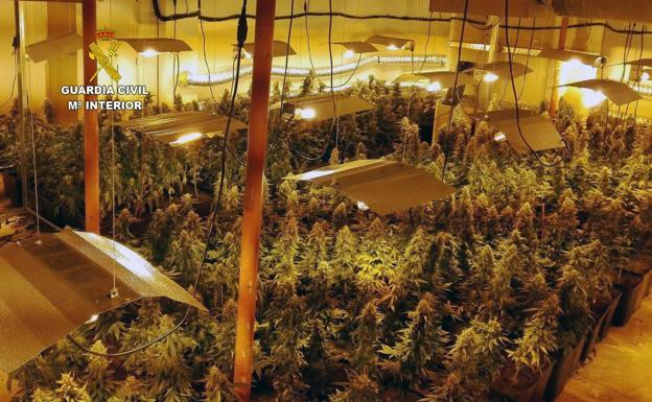 Cinco vizcaínos son detenidos en Cantabria por cultivo de marihuana,
