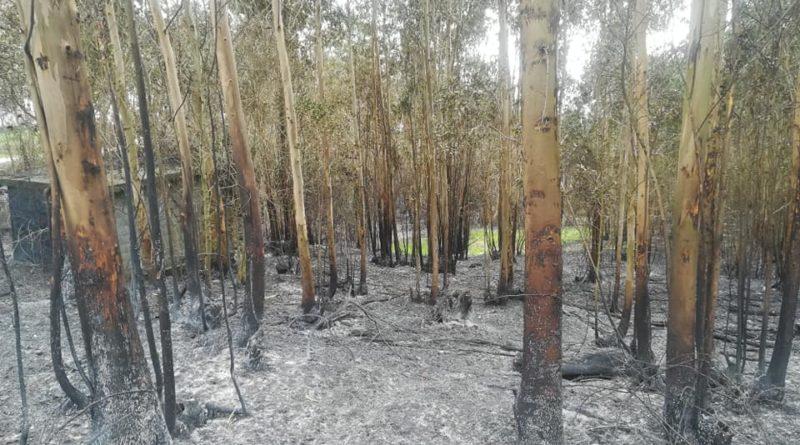 Cifran la superficie afectada por los siete incendios de los últimos días en Bizkaia en 151,85 hectáreas,