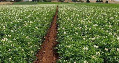 Financian con 3.955.000 euros inversiones en explotaciones agrícolas e  incorporan jóvenes al sector primario,