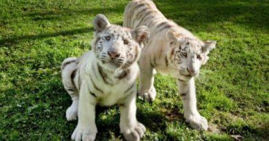 Sendaviva se une a la solicitud de todos los parques de ocio y zoo que solicitan al Gobierno central un plan para proteger el empleo,