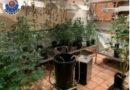 Descubren una plantación de marihuana en un inmueble al acudir a un posible incidente entre una pareja