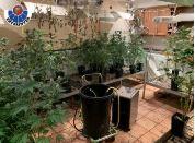 Descubren una plantación de marihuana en un inmueble al acudir a un posible incidente entre una pareja,