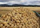 Mercadona compra 630.000 kilos de patata de Álava, un 21% más que la anterior