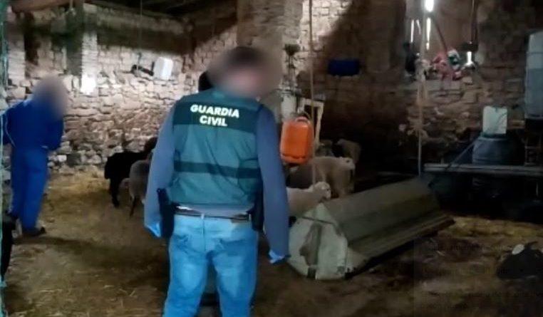 Recuperan en Navarra  animales robados a ganaderos de Álava,