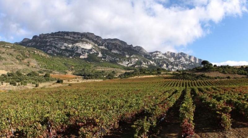 La vendimia de uva blanca podría comenzar en 7 días y la de variedades tintas en dos semanas,