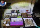 Desmantelan un grupo dedicado al expolio arqueológico en Araba e interviene más de 20.000 restos,
